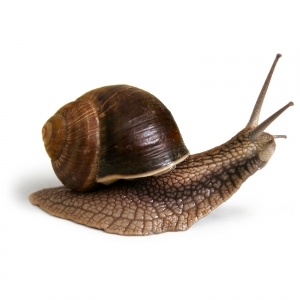 ilustracja ślimaka